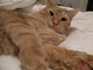 Adopt a Special Pet, Day 4: Oscar