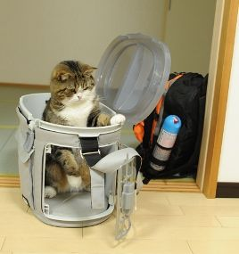 Cats in Japan: Updates and How to Help