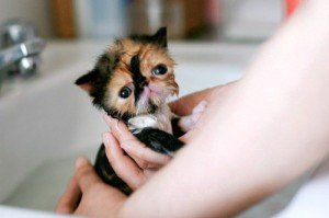 What Flea Products are Safe For a Tiny Kitten?