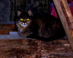 Dahlia Tells All: The Barn Cat