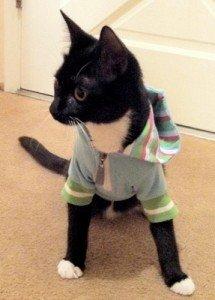 Am I Doomed to Life as a Cat Burglar?