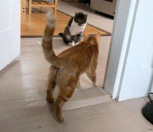 New Cat Update: Confidence Rises; Doors Open