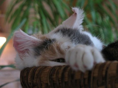 My Cat Has High Creatinine Levels. What's Wrong?