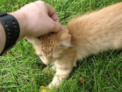 Will My Husband Ever Win Back My Kitten's Trust?