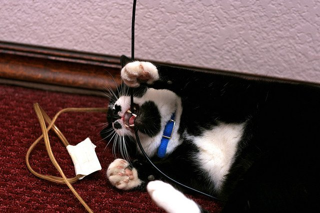 how can i stop my cats from chewing wires cat advice paws and effect. Black Bedroom Furniture Sets. Home Design Ideas