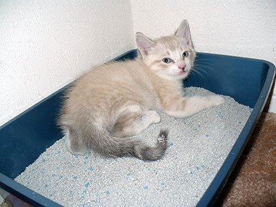 My Cat Pees Over the Edge of the Litter Box. Help!