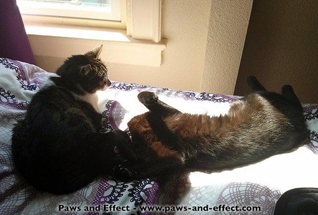cat eat mice