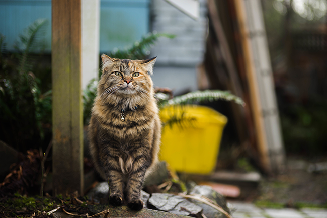 A feral cat can be hard to catch--even a wounded one--but we've got some tips in this post to help you get a feral kitty that needs medical attention.