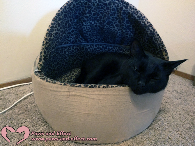 A hooded bed in a corner can be a safe spot for a traumatized cat.