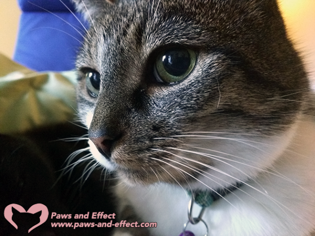 Paws and Effect HQ Update: Making Mama Feel Better