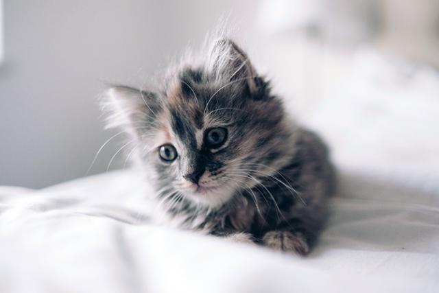 What's Up With My Kitten's Weird Bedtime Behavior?