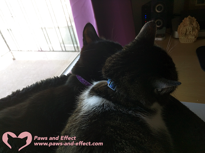 Cool Cat Collars come in a huge variety of colors and styles.