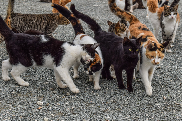 Will A Feral Cat Mother Take Her Kittens Back?