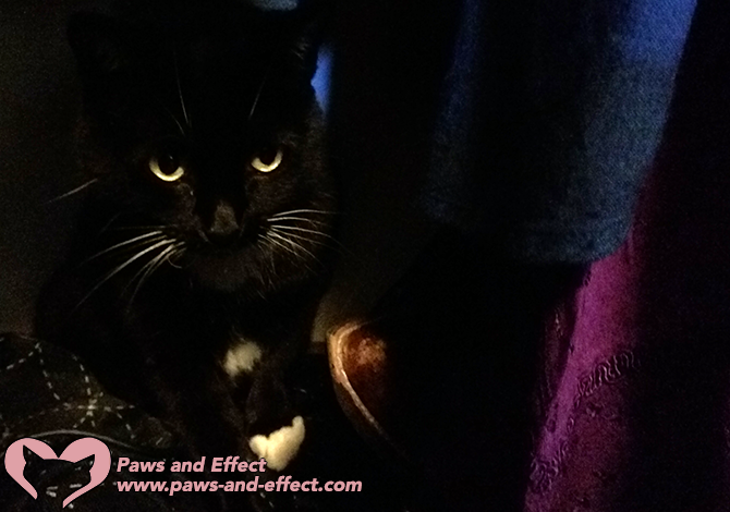 Erica's cat has been abandoned by two other owners, and now the cat is scratching and biting at her. Does her cat have PTSD? Get our answer, and what to do about it, in this post.