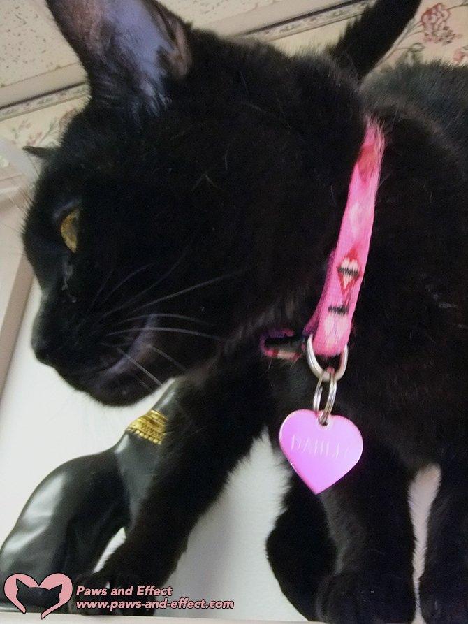 On Rainbow Bridge Remembrance Day, I celebrate Dahlia P. Kittenface.