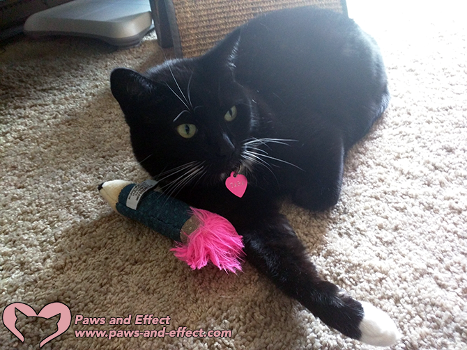 Karla wants to know why her cat will pee outside the box every time she goes away. Get the Paws and Effect Gang's answer in this week's post.