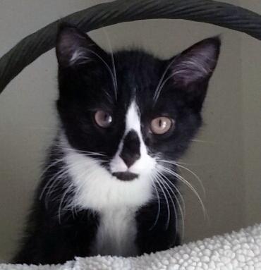Martha's kitten has brownish eyes.
