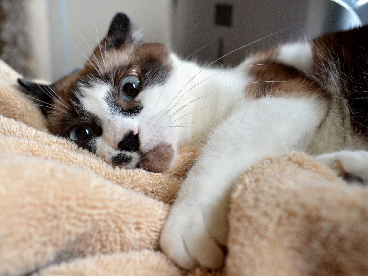 Erica recently found out that her cat is several years older than she thought. What can she do to keep her senior cat healthy? Get our tips in this post.