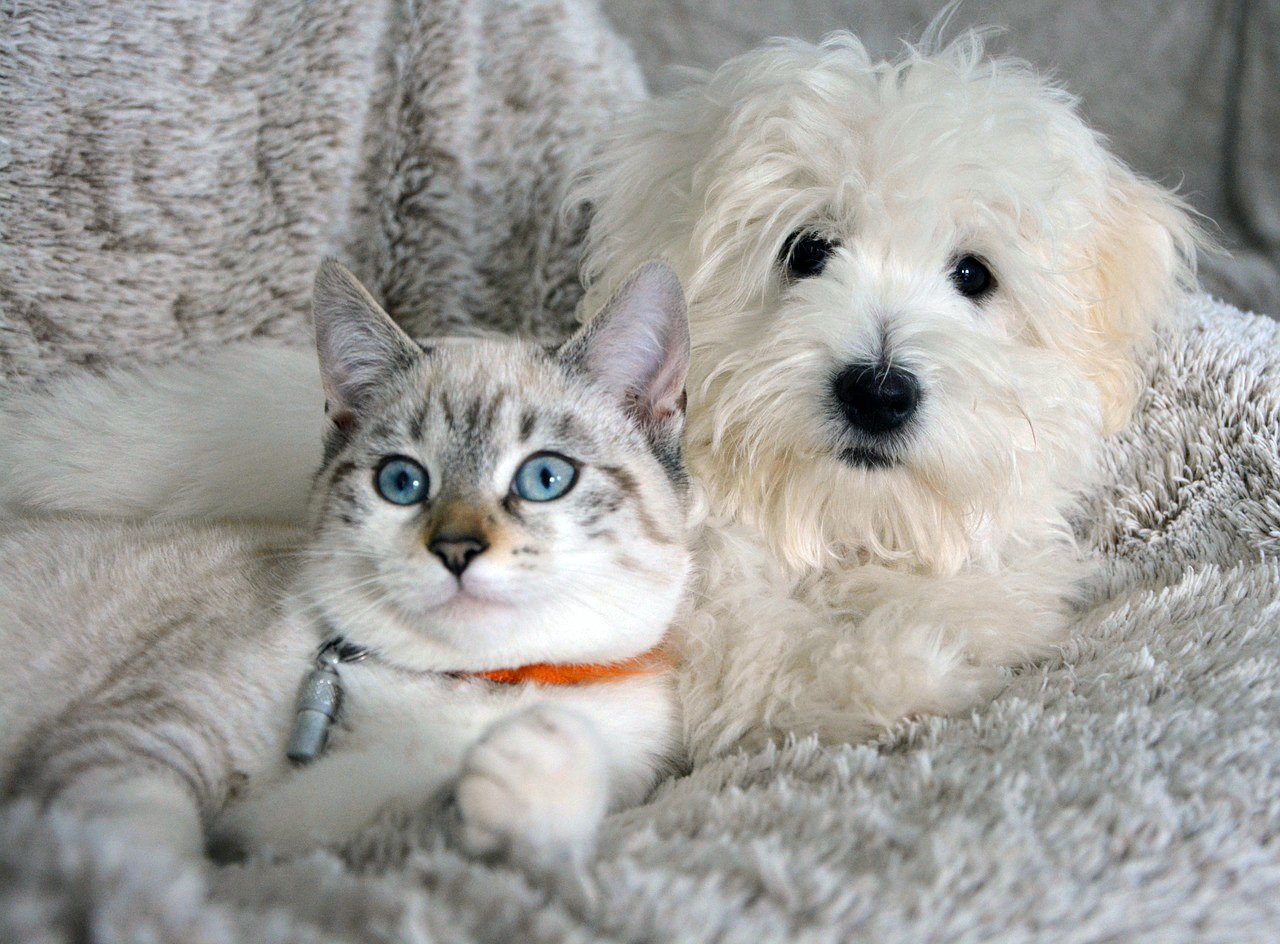 Mimsie wants to know how to introduce a dog to her two cats, who haven't reacted well to the introduction of a canine companion. Get our tips in this post.