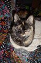 A most extraordinary cat: An interview with elderkitty Asti