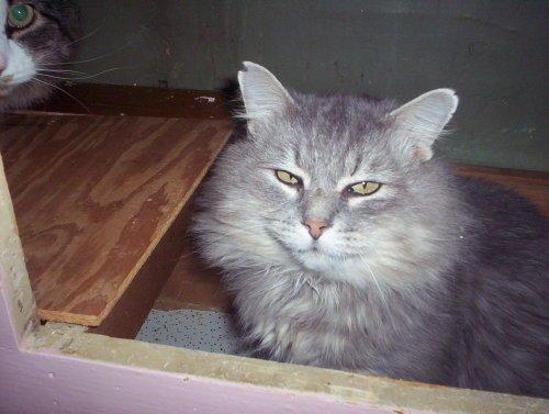Adopt a Special Pet, Day 5: Gilbert Gustav