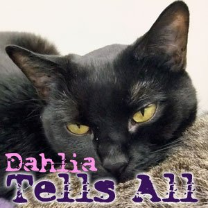 Dahlia Tells All: You Don't Have to Thank Me