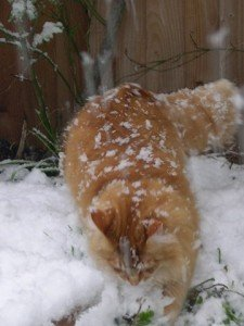 How Cold is Too Cold for an Outdoor Cat?
