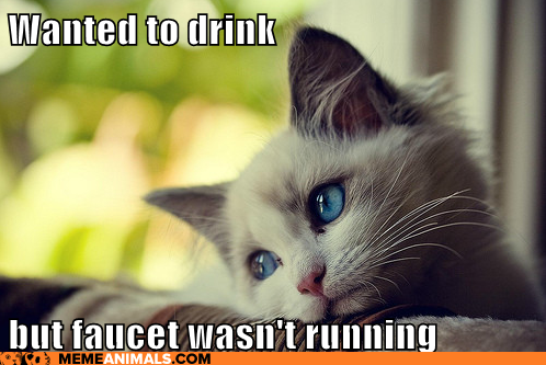 Why Has My Cat Become A Faucet Licker? - Cat Advice | Paws and Effect