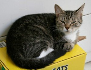 How Can We Help Our Cat Love His Litterbox?
