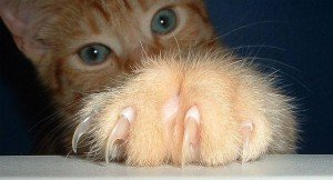 My Cat Has Too Many Claws. Help!