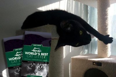 Win 2 Bags of World's Best Cat Litter Forest Scented Clumping Formula