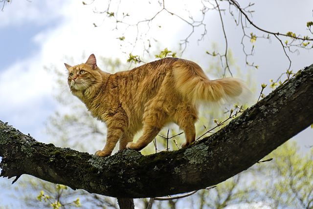 How To Keep Outside Cats Safe