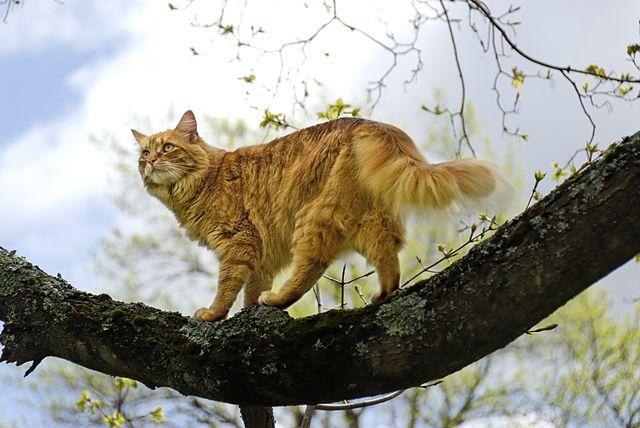 How Long Do Indoor Outdoor Cats Live