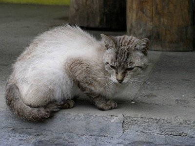 I've Fallen In Love With A Cat I Can't Adopt. Help!