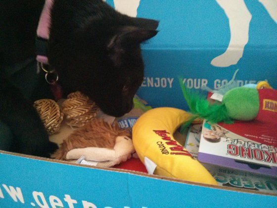 Review: PetBox, a Monthly Gift Box for Spoiled Kitties
