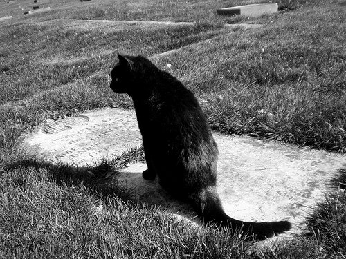 If I Die Before My Cats, How Can I Ensure They'll Be OK?