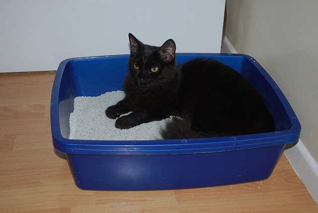 My Cat Is Pooping Outside the Litter Box. Help!
