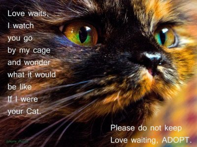 I Want You … to Adopt an Adult Cat