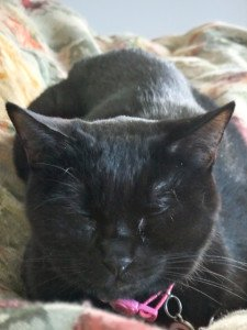 My Cat Was Fine, Then A Week Later He Was Dead. Why?