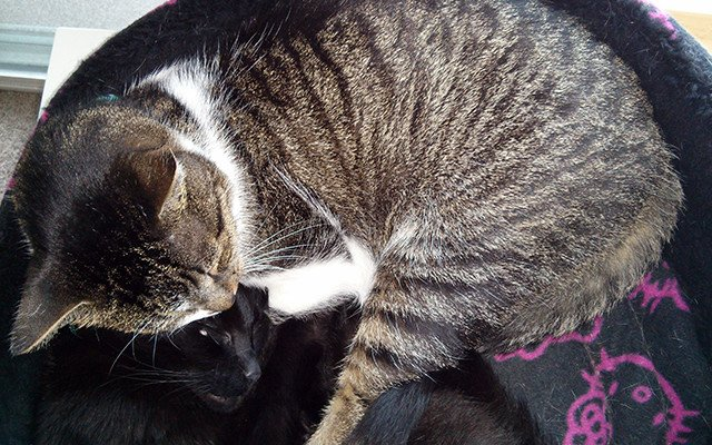 Thomas, a tabby cat, snoozes with his best girl, Belladonna.