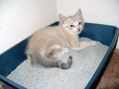 A Kitten Playing In Litter Box