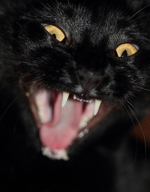 My Cat Is So Aggressive, I Can't Get Her To the Vet. Help!