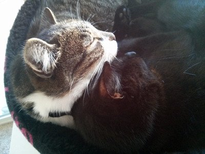 Share the Love: Bring Home an Adult Cat … Or Two!