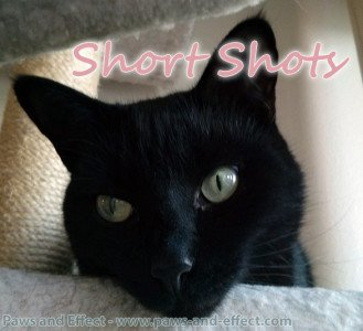 Short Shots: Quick Answers to Quick Cat Questions, part 1