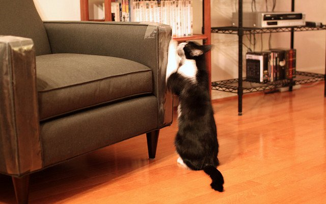 A black and white cat scratches a sofa arm