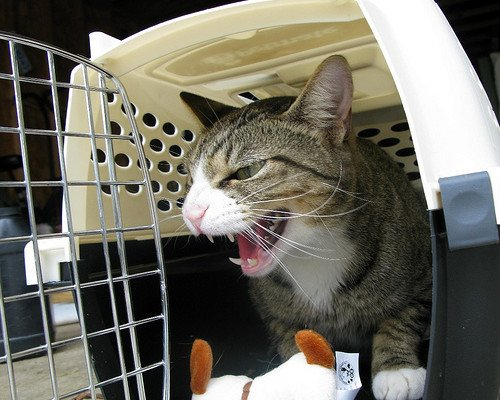 My Cat Gets Really Aggressive At the Vet. Help!