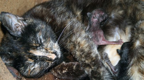 My Cat Is Having Kittens Just Before We Move. Help!