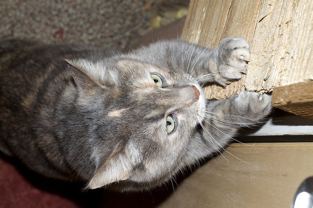 How Can I Keep My Cat From Scratching Furniture?