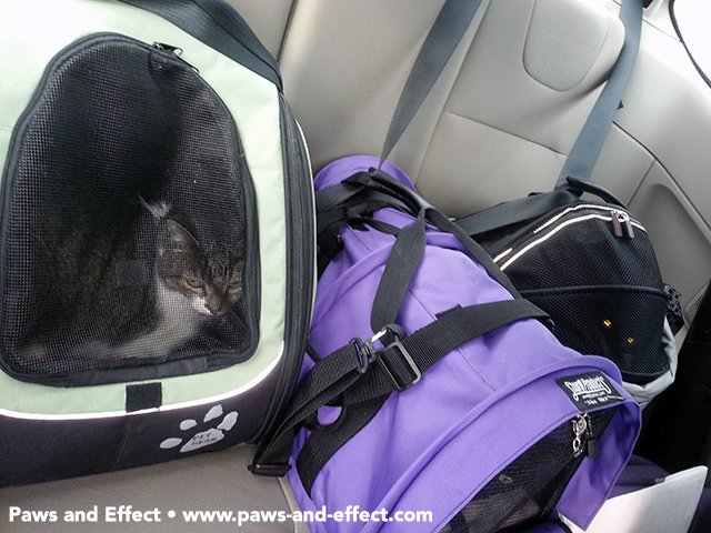 Traveling with cats can be quite an undertaking.