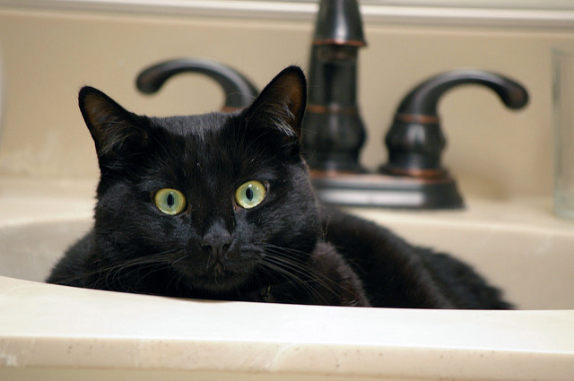 Why Is My Cat Peeing In the Sink? - Paws and Effect